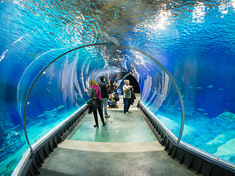 The largest tank of the Afrykarium in the Wroclaw Zoo shows the depths of the Mozambique Channel, where sharks, rays, and other large pelagic fish can be viewed from this 18 meter long underwater acrylic tunnel Afrykarium tunel.jpg