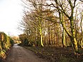Afternoon trees - geograph.org.uk - 2189041.jpg