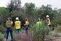 Agencies working together at SR-76 Restoration Site (34064418064).jpg