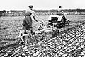 Agriculture in Britain during the First World War Q54602.jpg