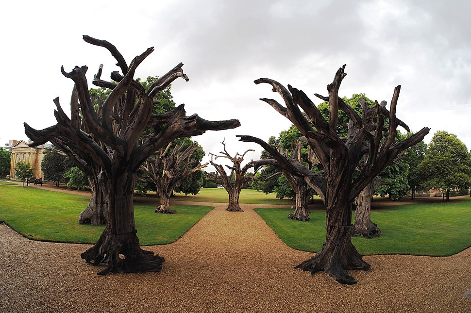 Ai Weiwei Trees Downing College A