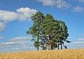 Aitsra põlispuud.jpg