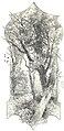 Almanaque de las portenas 1895 (page 26 crop).jpg