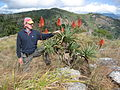 Aloe arborescens and I on Mount Vumba (10242751914).jpg
