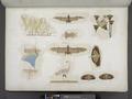Altri uccelli, pipistrelli, farfalle ec. rappresentati nelle tombe (NYPL b14291206-425568).tiff