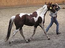American Paint Horse.JPG