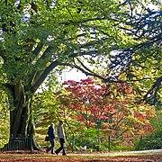 An autumn walk with the dog, Belle Vue Park, Newport (geograph 3714352).jpg
