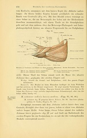 File:Anatomie des Frosches (Page 170, Fig. 95) BHL4404769.jpg ...