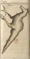 Andry - De la génération des vers (1741), planche p. 319.png