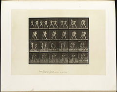 Animal locomotion. Plate 330 (Boston Public Library).jpg