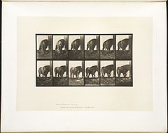 Animal locomotion. Plate 724 (Boston Public Library).jpg