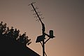 Antenna sunset, yagi, weather monitoring station (42526455571).jpg