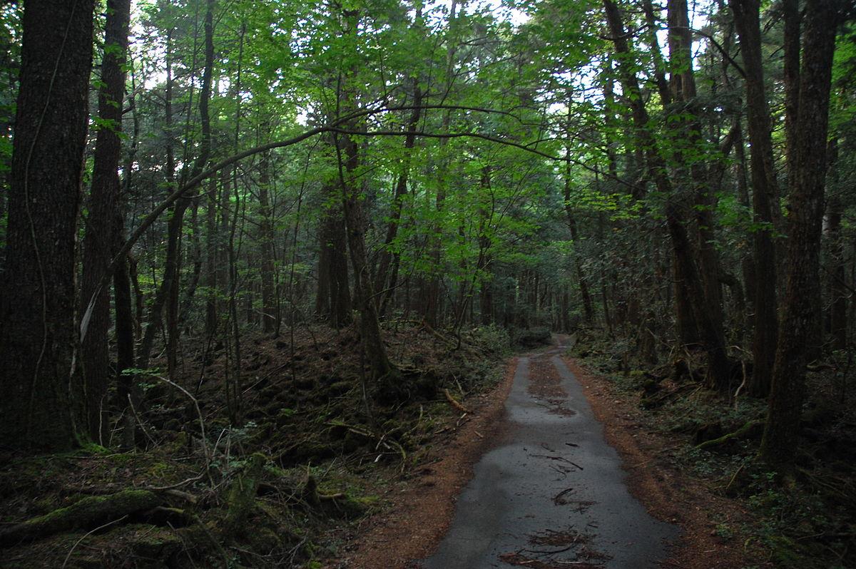Hasil gambar untuk kondisi hutan aokigahara