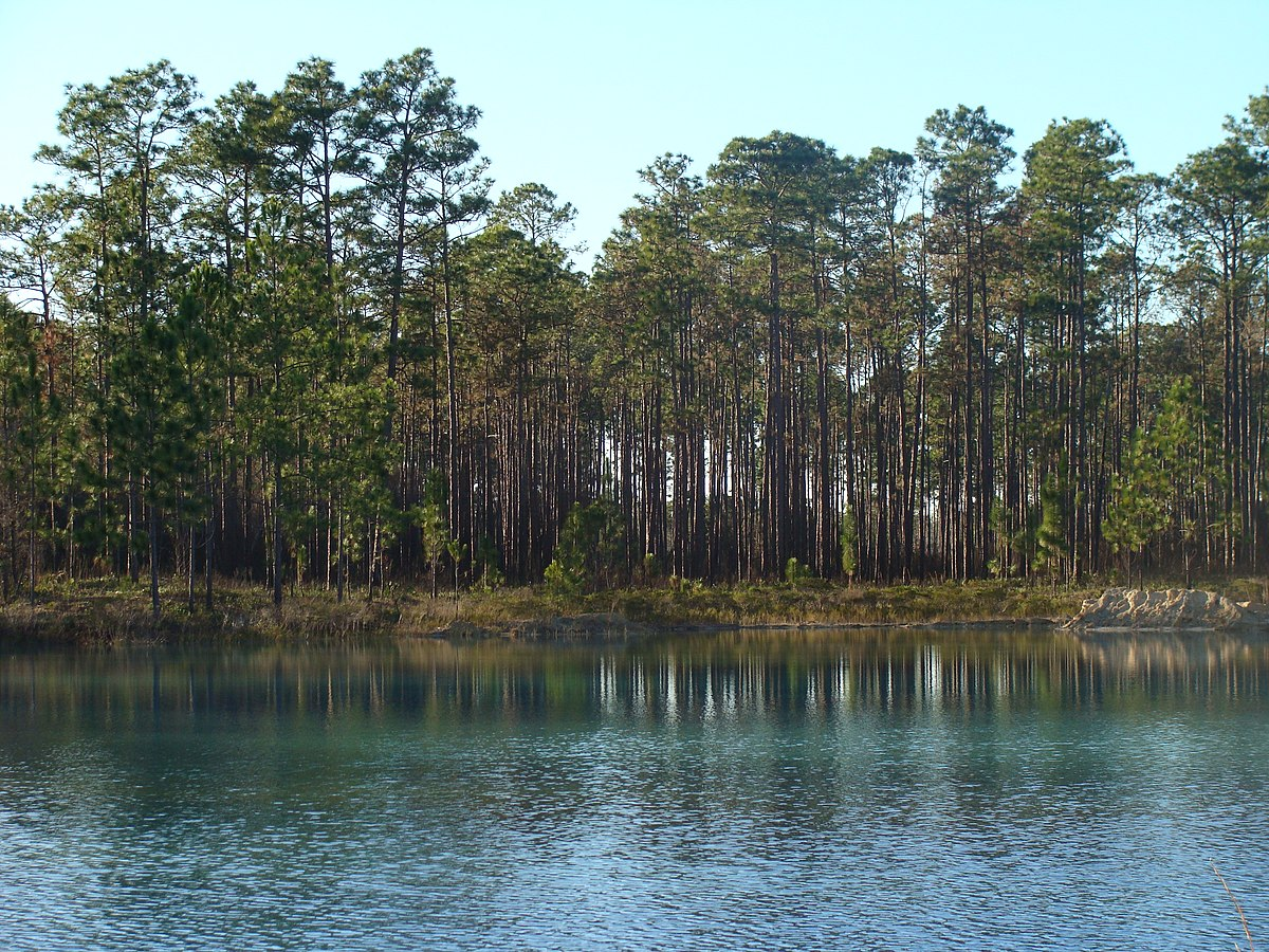 Apalachicola National Forest Wikipedia