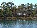 Apalachicola pond.JPG