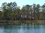 A photo of an artificial pond off of FH-111 in Apalachicola National Forest.