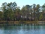 Kuva keinotekoisesta lampi FH-111: stä Apalachicola National Forestissa.