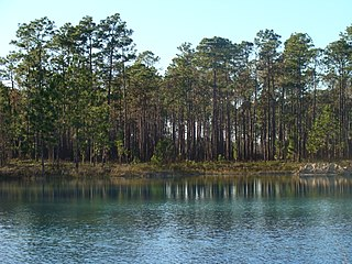 Apalachicola National Forest A national forest located Florida