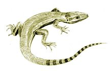 a greyish green lizard