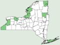 Artemisia campestris ssp caudata NY-dist-map.png