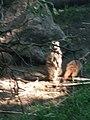Artis, Zoo, Dierentuin - panoramio (120).jpg