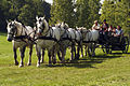 Attelage Divers mondial du cheval percheron 2011Cl J Weber03 (24083529625).jpg