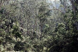 Flora of Australia - Image: Australian bush 02