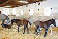 Austria-01115 - Mares and Foals (21464234699).jpg