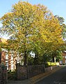 Autumn Colour, Newport, Barton Upon Humber - geograph.org.uk - 1542325.jpg