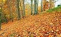 Autumn at Huntly Wood near Banbridge (4) - geograph.org.uk - 1046295.jpg