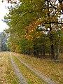 Autumn road - panoramio.jpg