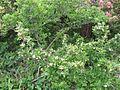 Azaleas on Mount Guifengshan in Macheng City, Huanggang, Hubei 33.jpeg
