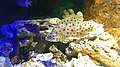Béziers - Aquarium Polygone 03.jpg