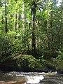 Balade à Saül, parc amazonien de Guyane.jpg