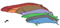 Baleen whale sizes neutral.png
