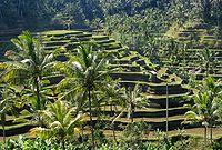 Bali panorama.jpg