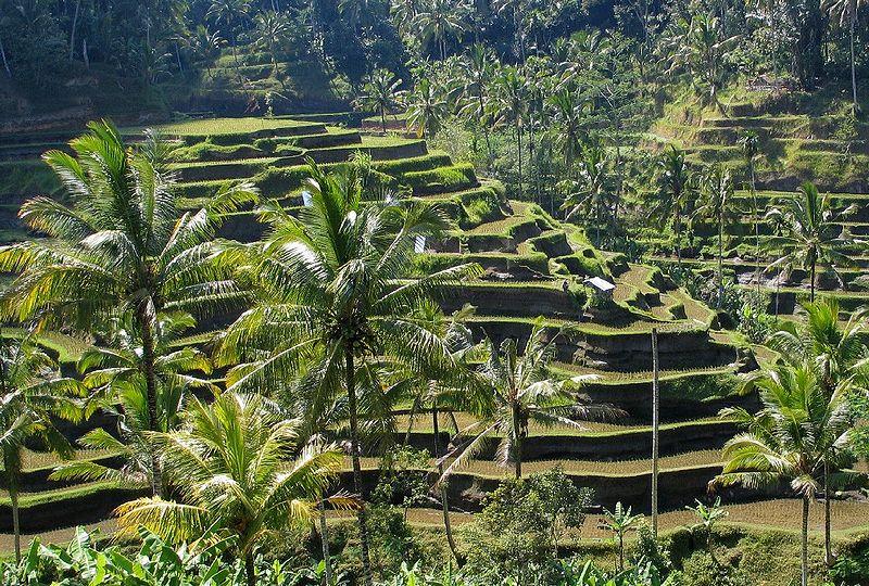 Cultural Landscape of Bali Province: the Subak System as a Manifestation of the Tri Hita Karana Philosophy