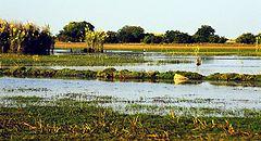 240px-Bangweulu_Swamps.jpg