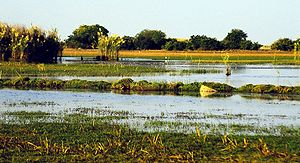 Lake Bangweulu - The Bangweulu Swamps in the dry season