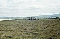 Barbette Saltmarsh. Spain (37047562874).jpg