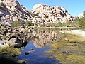 Barker Dam - panoramio (2).jpg