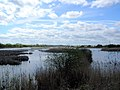 Barrow Haven Reedbed - geograph.org.uk - 169523.jpg