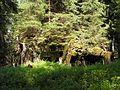 Bartošovice v Orlických horách, R-S 67 (rok 2010; 01).jpg