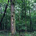 Baum BW.jpg