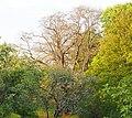 Baum Lochmühlenweg Oberwartha.jpg