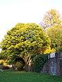 Baum im Herbstlicht - panoramio.jpg