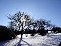 Baum und Sonne - panoramio.jpg