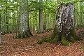 Bayerischer Wald - Mittelsteighütte 002.jpg