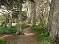 Bayside Path Through Cypress Trees and Wildflowers.jpg