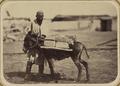 Bazaar Types. Cane Vendor WDL10701.png